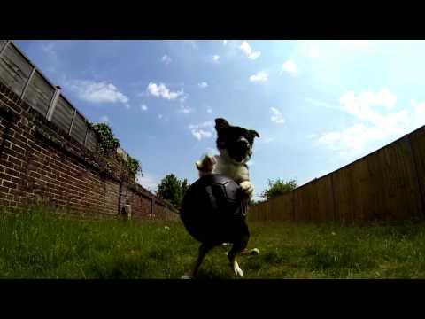 Border Collie Puppy - Gopro + Twixtor