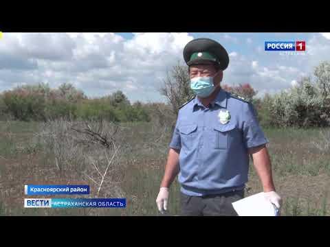 В Астраханской области Управлением Россельхознадзора выявлен земельный участок, заросший древесно-кустарниковой растительностью