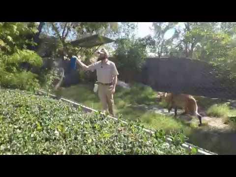 San Diego Zoo-Wolf show