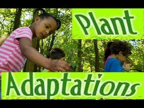 Adaptations in Plants -Video lesson for Kids