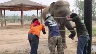 preview picture of video 'Elephant Care Thailand'