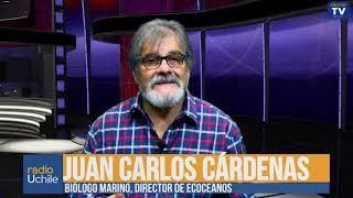 Juan Carlos Cárdenas: Los trabajadores que mueren en la industria salmonera chilena