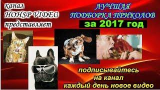 ПРИКОЛЫ 2017 ИЮЛЬ № 20 ржака до слез угар прикол ПРИКОЛЮХА HOHSP VIDEO