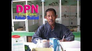 preview picture of video 'DPN Birdfarm Perkutut Pattani'
