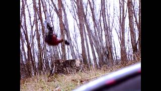 preview picture of video 'wild parkour | ноябрь 2012'