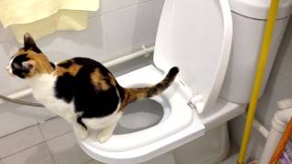 CitiKitty Cat Toilet Training Kit. Success!!!