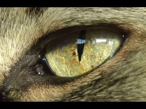 Cat's Eye Extreme Close-up