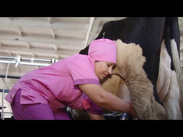 Лучшая доярка живёт в Эхирит-Булагатском районе