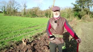 Farmer know-how: coppice a hedge