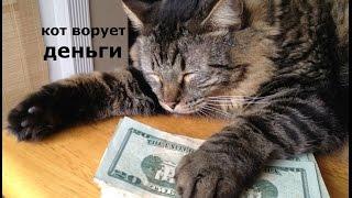 Кот ворует деньги)