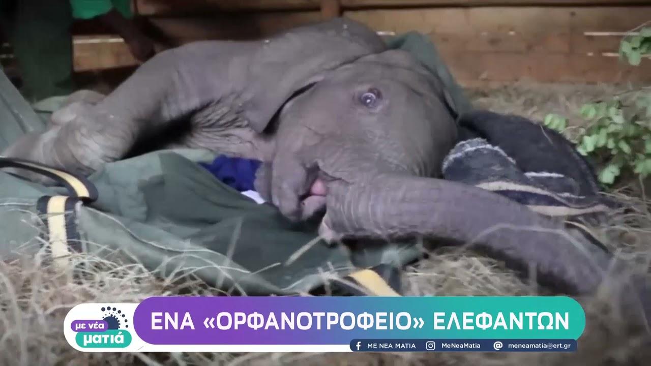 Κένυα: Ένα «ορφανοτροφείο» ελεφάντων | 11/10/21 | ΕΡΤ