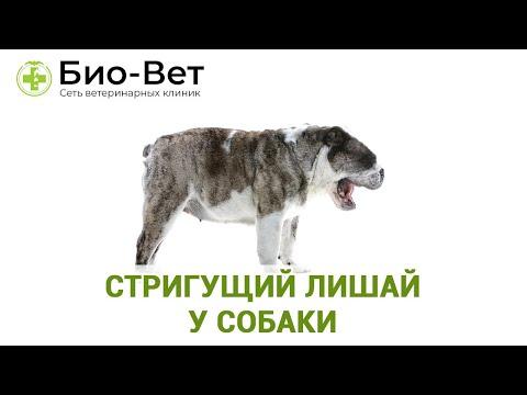 Стригущий Лишай у Собак - Симптомы и Лечение // Сеть Ветклиник Био-Вет.