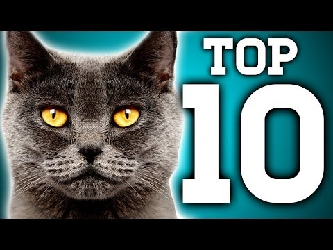 Awesome! 10 Cat Facts You Need To Know | Earth Unplugged