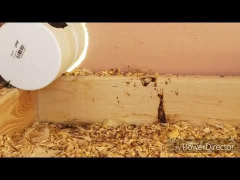 Las máscaras para el adelgazamiento del poso de café