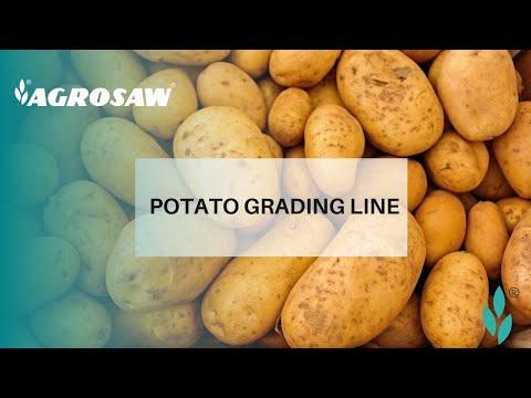 Fruit and Vegetable Sorting Grading Line