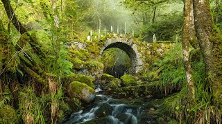 Peaceful Music, Relaxing Music, Celtic Instrumental Music  Celtic Forest By Tim Janis