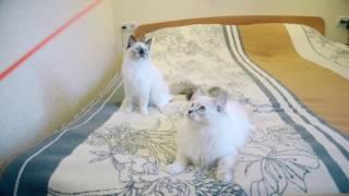 Кошки Жанка (Гера)  и Гармония 01_09