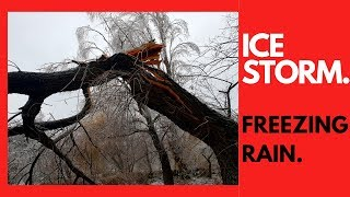 Ice Storm VS Trees - Freezing Rain in Action -Extreme Weather Conditions - Ice Event