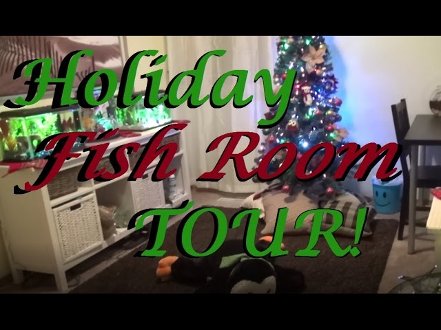FULL HOLIDAY FISH ROOM TOUR!