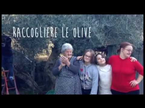 Watch video Raccogliere le olive