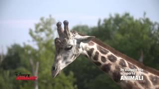 Disney Junior - Alla Scoperta degli Animali - Giraffe