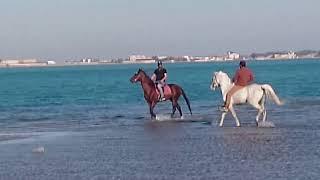 preview picture of video 'ركوب الخيل في شاطئ العزيزية ( الخبرالسعودية)'