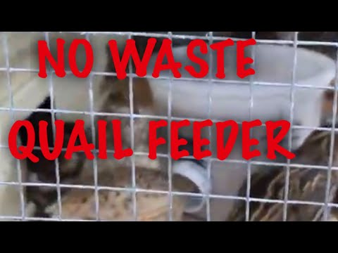 , title : 'DIY No Waste Quail Feeder.