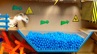 🐹Pool Maze for Hamster and Dragon in Maze for pets with Traps. Obstracle course