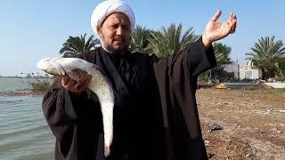 أكل سمك الجري   حكم اكل سمك الجري عند السنة والشيعة وسبب حرمته عند اتباع اهل البيت عليهم السلام  .