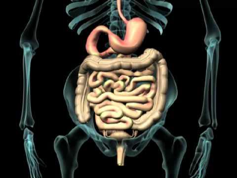 Dolore in passaggio posteriore e dolore di stomaco