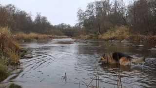 preview picture of video 'Pühapäev koera ja pardiga Pirita jõel'