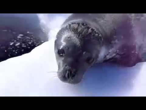 Ok, the sound this seal makes is WAY too funny not to post here.