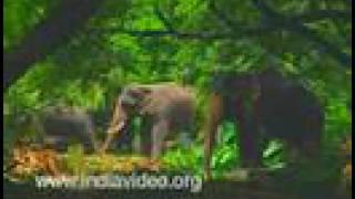 Elephant Hostel at Punnathoorkotta
