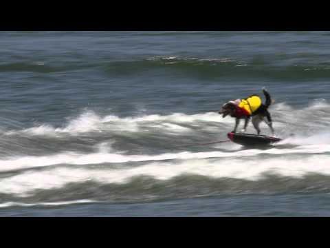 Jumpy, an Extreme Dog!