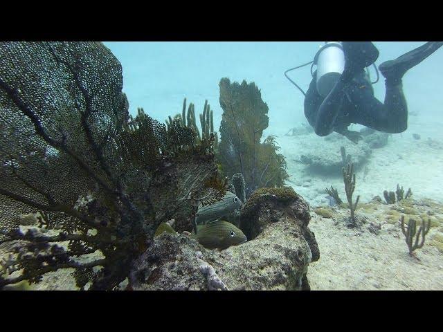 Playa del Carmen Jardines Reef Dive