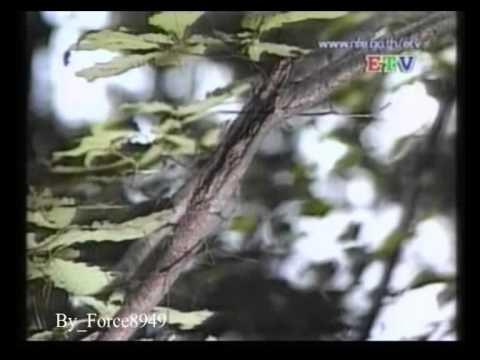 ทิงเจอร์ไม้เรียวของ Giardia