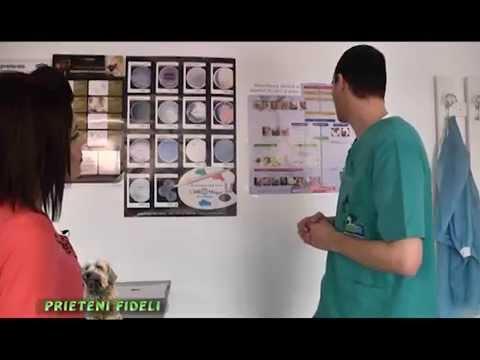 Kevert helminthiasis kezelése