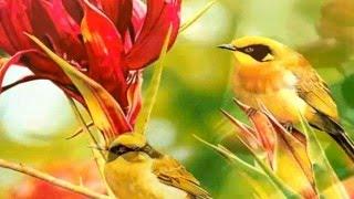 Música terapia ambiental relax sonidos de la naturaleza