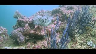 preview picture of video 'Diving Oman (report) - La plongée à Oman (reportage)'