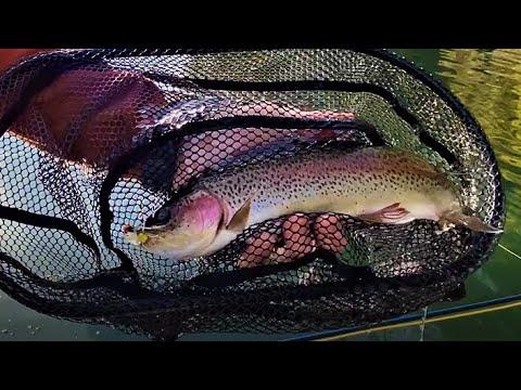Hopper Fly Fishing in November - WHAT?!?