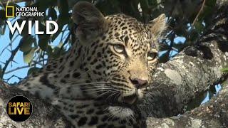 Safari Live - Day 295 | Nat Geo Wild
