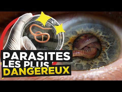 Vvs les parasites torrent