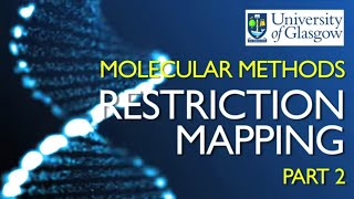 Restriction Mapping 2