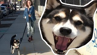 """""""I'm just trying to trust in the shiba.""""   Check out more awesome videos at BuzzFeedVideo! https://bit.ly/YTbuzzfeedvideo https://bit.ly/YTbuzzfeedblue1 https://bit.ly/YTbuzzfeedviolet  GET MORE BUZZFEED: https://www.buzzfeed.com https://www.buzzfeed.com/videos https://www.youtube.com/buzzfeedvideo https://www.youtube.com/boldly https://www.youtube.com/buzzfeedblue https://www.youtube.com/buzzfeedviolet https://www.youtube.com/perolike https://www.youtube.com/ladylike  BuzzFeedVideo BuzzFeed Motion Picture's flagship channel. Sometimes funny, sometimes serious, always shareable. New videos posted daily!  MUSIC Licensed via Audio Network SFX Provided By AudioBlocks (https://www.audioblocks.com)  STILLS Icon - Ambulance, Police Siren - Illustration Getty Images / Shivendu Jauhari/Getty Images  Credits: https://www.buzzfeed.com/bfmp/videos/48811"""