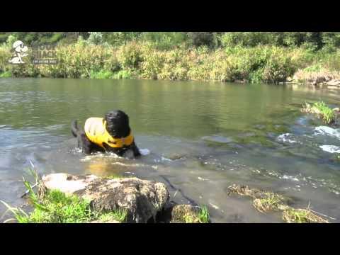 Ruffwear K-9 Float Coat Hundeschwimmweste