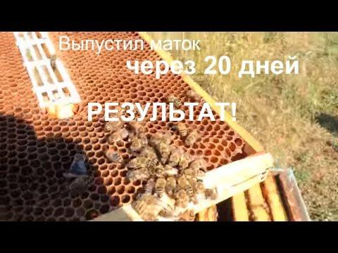 пчелоМатка 20 дней в изоляторе/результат/пасека 2018/медосбор