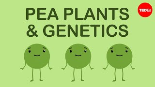 How Mendel's Pea Plants Helped Us Understand Genetics - Hortensia Jiménez Díaz