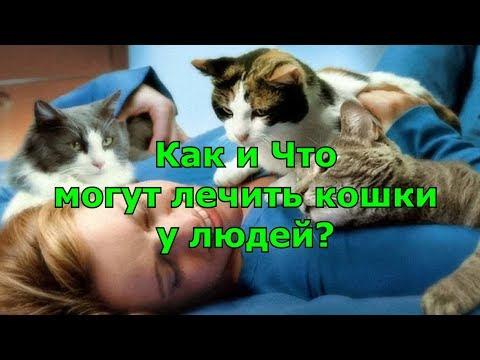 Как и Что могут лечить кошки у людей.