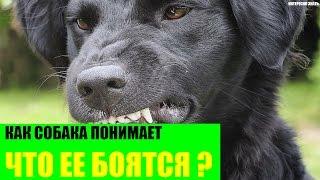 Как собака понимает что ее боятся?