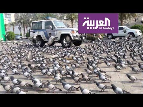 العرب اليوم - شاهد: حَمام مكة يحط في الشوارع المحيطة بالحرم المكي